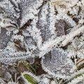 Ground Frozen 038