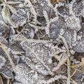 Ground Frozen 040