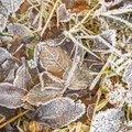 Ground Frozen 041