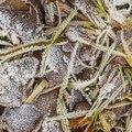 Ground Frozen 043