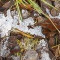 Ground Frozen 048