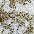 Ground Frozen 052