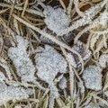 Ground Frozen 053