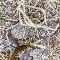 Ground Frozen 061