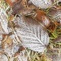Ground Frozen 063