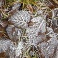 Ground Frozen 064