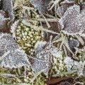 Ground Frozen 065
