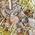 Ground Frozen 066