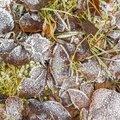 Ground Frozen 067
