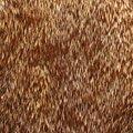 Fabric Fur 004