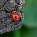 Fauna Insects 074