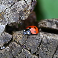 Fauna Insects 076