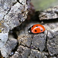 Fauna Insects 077
