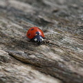 Fauna Insects 079