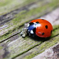 Fauna Insects 083