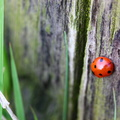 Fauna Insects 084