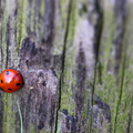 Fauna Insects 085