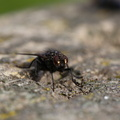 Fauna Insects 089
