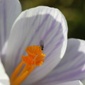 Fauna Insects 092