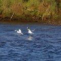 Fauna Birds 093