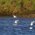 Fauna Birds 095