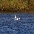 Fauna Birds 096