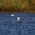 Fauna Birds 097