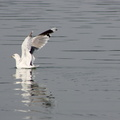 Fauna Birds 099