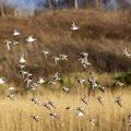 Fauna Birds 100