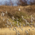 Fauna Birds 101