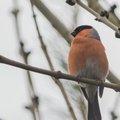 Fauna Birds 102