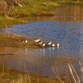 Fauna Birds 103