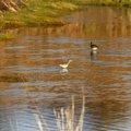 Fauna Birds 106