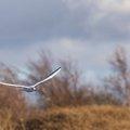 Fauna Birds 112