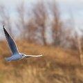 Fauna Birds 113