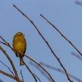 Fauna Birds 116