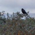 Fauna Birds 119