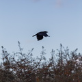 Fauna Birds 120