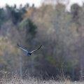 Fauna Birds 121