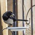 Fauna Birds 126