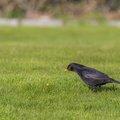 Fauna Birds 129
