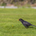 Fauna Birds 130