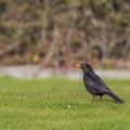 Fauna Birds 131