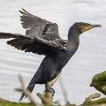Fauna Birds 133