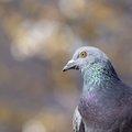 Fauna Birds 137