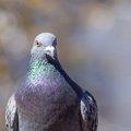 Fauna Birds 138