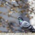 Fauna Birds 141