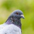 Fauna Birds 142