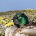 Fauna Birds 143