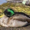 Fauna Birds 145